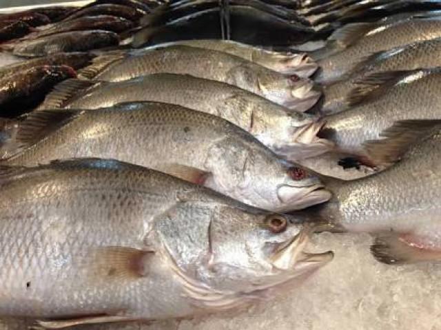 ขายปลากระพงขาว
